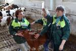 Ветеринарное обслуживание на мясной ферме, фото