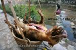 Собака - убитая и выпотрошенная для употребления в пищу