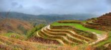 Terraced rice fields on a hillside, Jinkeng Terraced Field, Guangxi Province, China