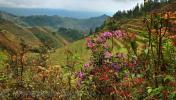 Окрестности Гуйлиня, рисовые террасы возле деревни Pingan (平安寨), уезд Lonsheng