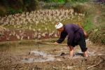 Китайский крестьянин на своем поле, фото из путешествия по Юго-Западному Китаю в апреле 2010 года