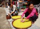 Женщины перебирают желтый рис