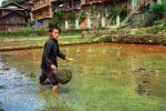 Ловля рыбы на рисовом поле
