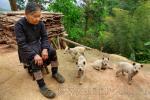 Dog in Southern China, Miao Basha, Congjiang County (贵州省从江县岜沙苗寨)