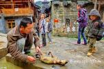 <b>Китайские школьники наблюдают за расчленением собаки
