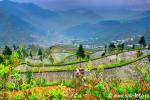 Залитые водой рисовые террасы горной деревни Xijiang
