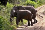 Этих бы слонов на наши пешеходные переходы