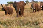 Фото-отчет о джип-сафари в национальном парке Серенгети, республика Танзания