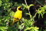 Когда я бродил с фотоаппаратом возле этой птицы в кемпинге парка Серенгети, я понятия не имел, как она называется