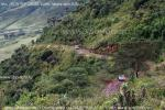На фото момент спуска в кратер вулкана Нгоро-Нгоро