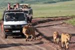 Хотите знать как происходит сафари на джипах в национальных парках Танзании, или Кении? Этот фотоснимок очень правдиво передает атмосферу джип-сафари в Восточной Африке