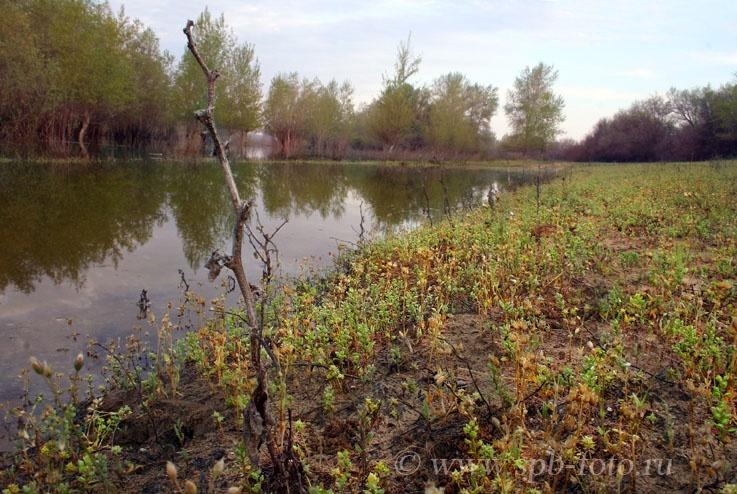 Весна в Астраханской области, фото