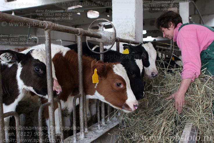 Фоторепортаж с животноводческого хозяйства