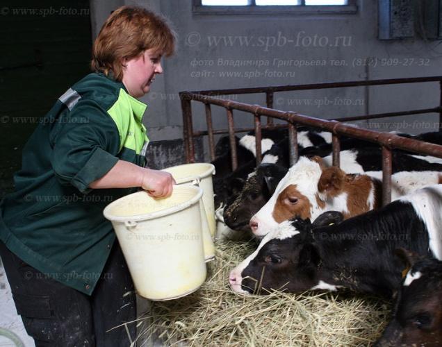 Услуги фотографа сельскому хозяйству