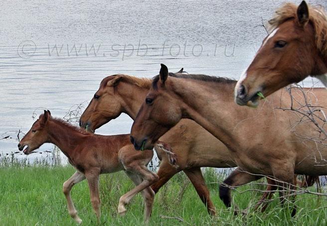 Лошади в Астраханской области