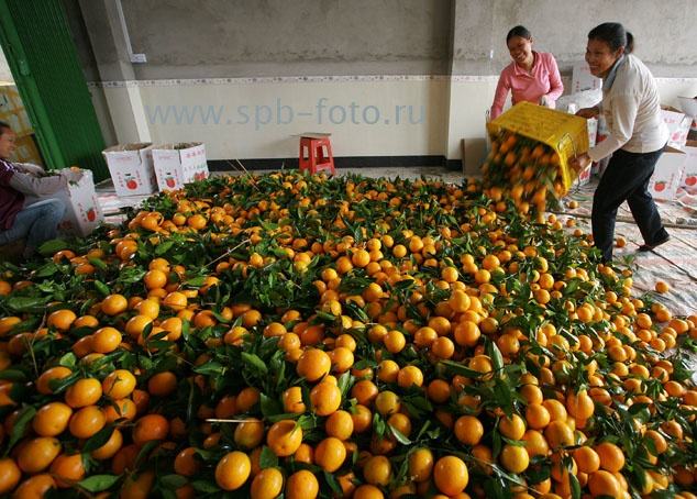 китайские апельсины и коронавирус