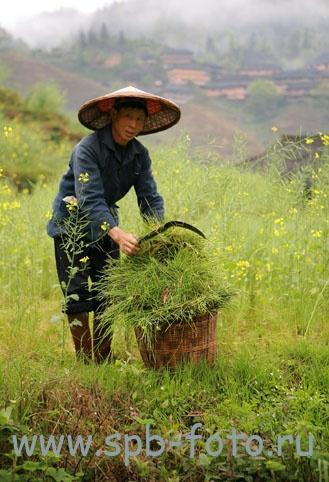 Крестьянин из  деревни Дажай, уезда Longsheng