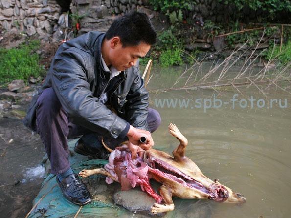 Едят ли китайцы собак? Фото