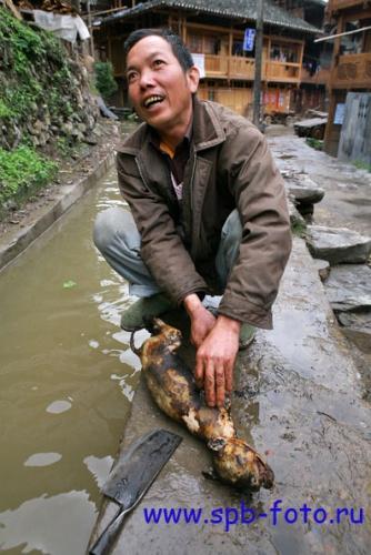 На фото: Разделывание собаки в Южном Китае