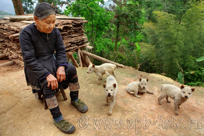 Puppies photographed in black Miao village of Biasha (Guizhou)