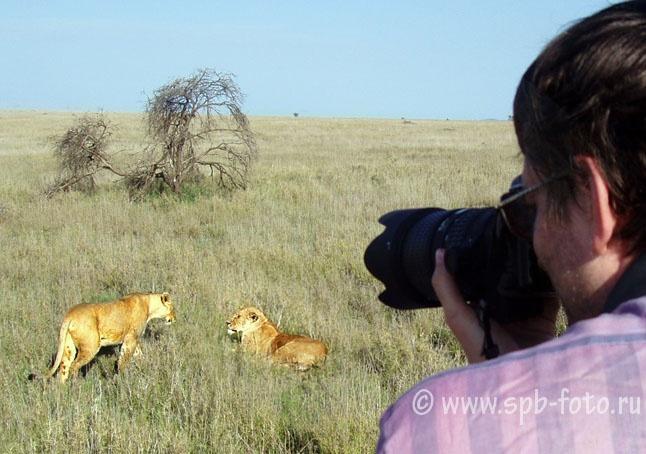 Фотоохота   на львов в Серенгети, Объединенная Республика Танзания, 2008 год