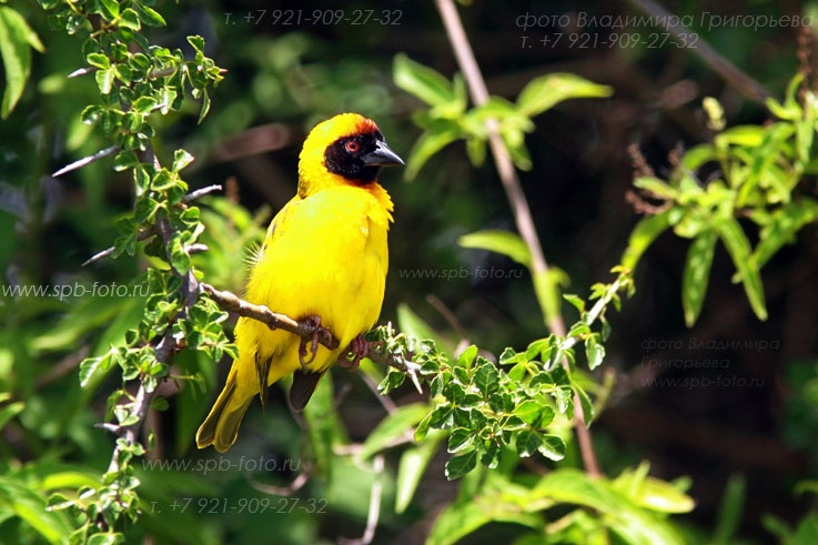 Птицы Танзании